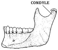 latmandible
